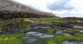 Hartlepool Headland project update